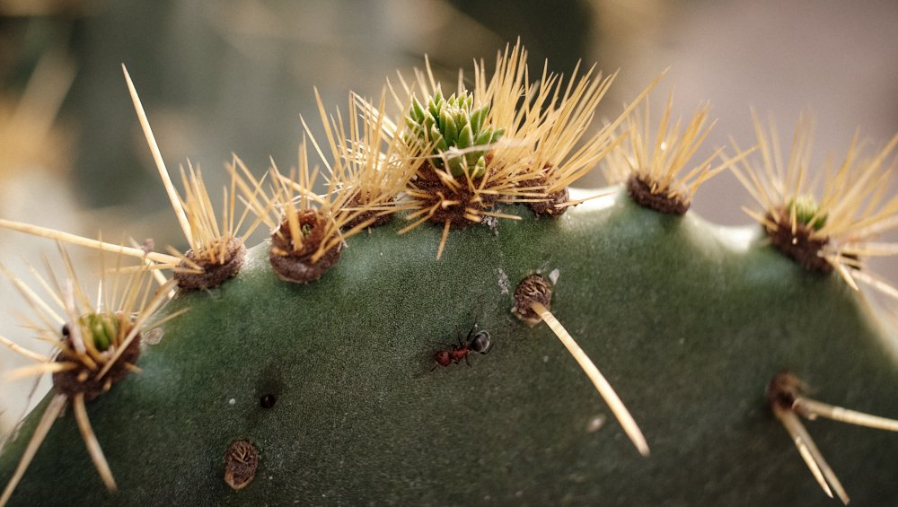 Cactus and ant.jpg