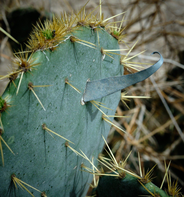 Cactus spike.jpg