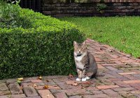 Cat00_s.jpg