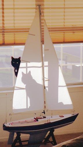 Cat_Boat_reduced.jpg