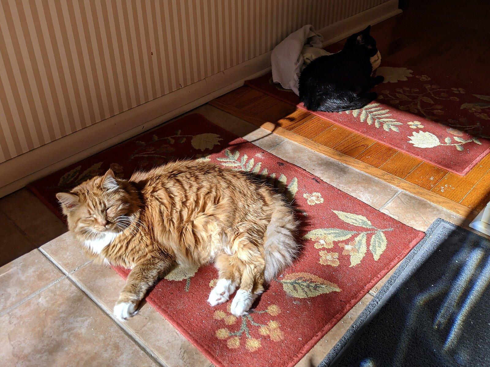 cats(1).jpg