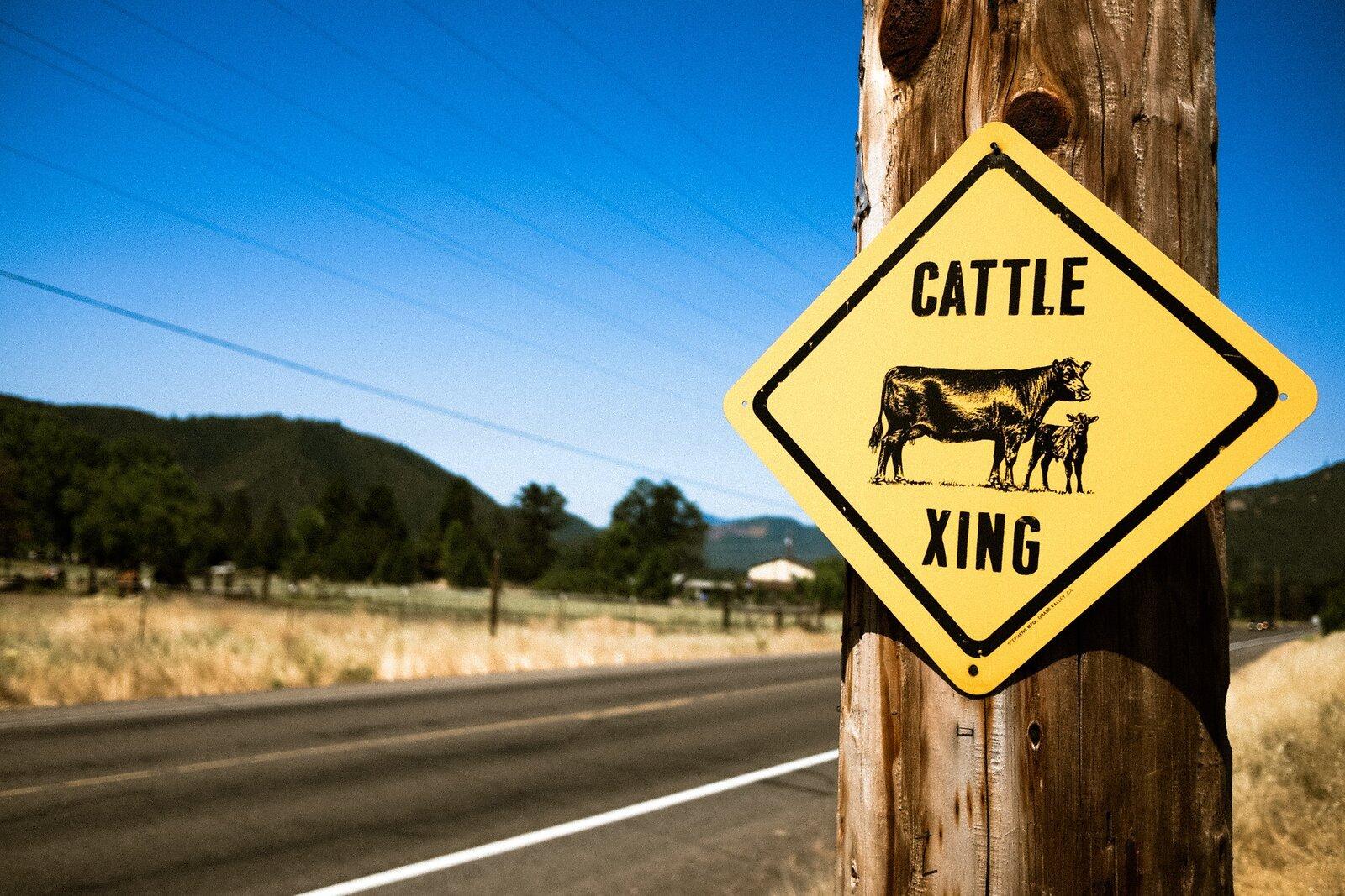 CattleXing.jpg