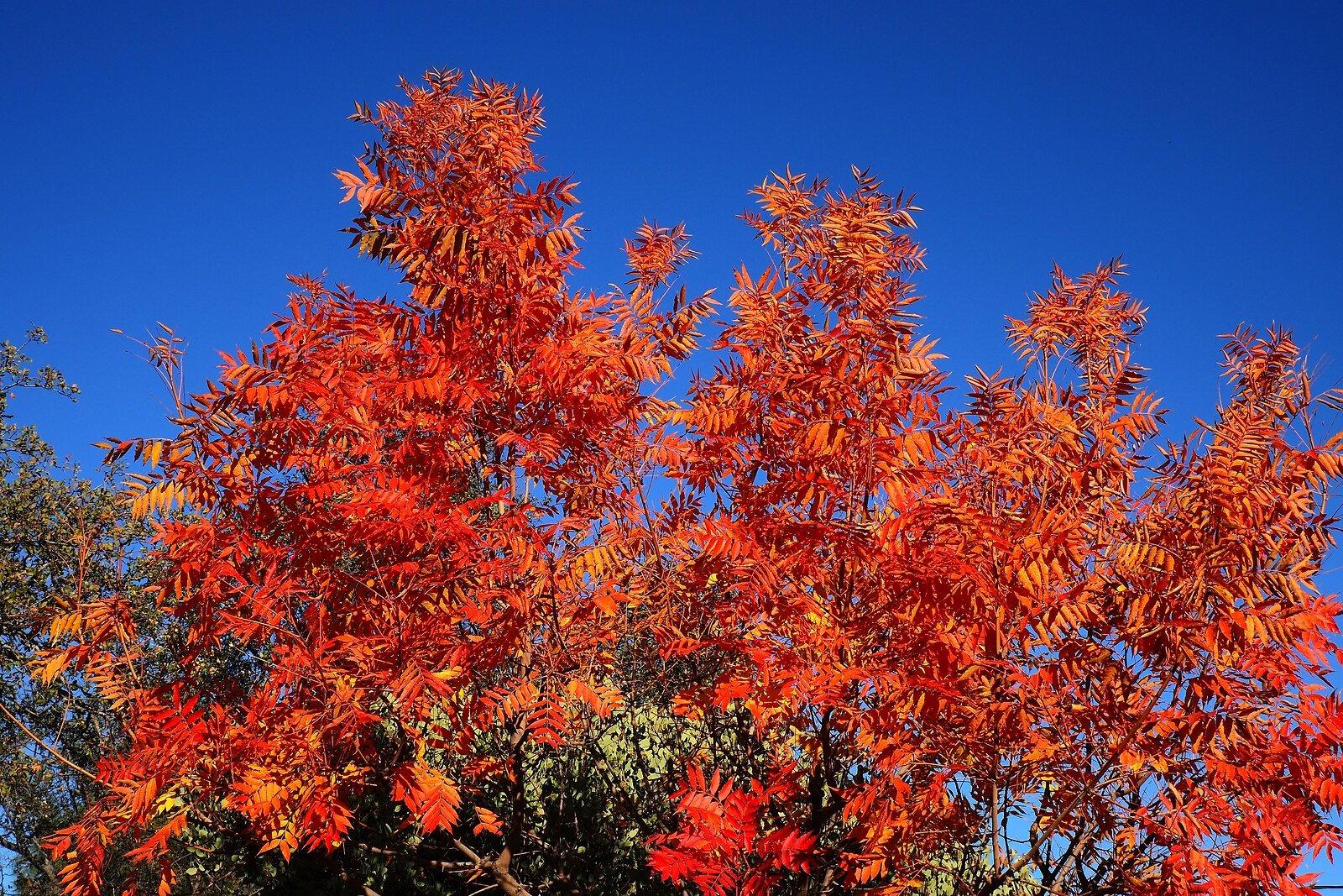 CB Tree.jpg