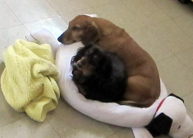 Circle_Dogs_001-001.JPG