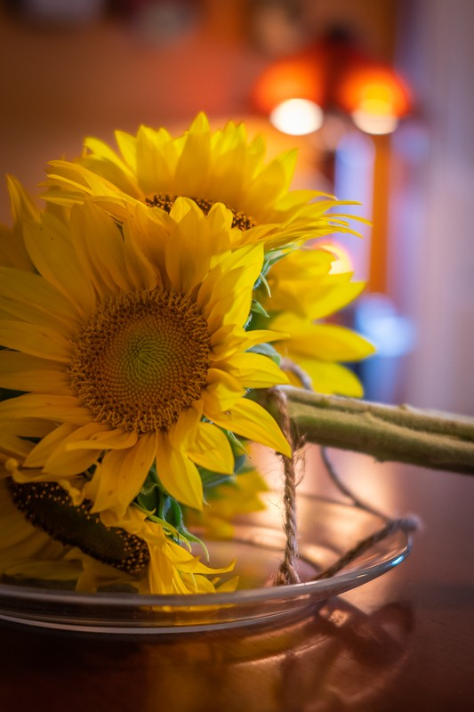 CL-Sigma-Sunflowers-ISO2000.jpg