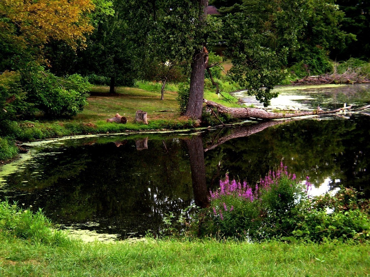 Coopers pond 004-1 (2).JPG