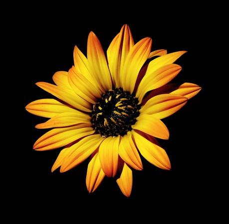 Copy%20of%20new%20flowers%20%282%29-M.jpg