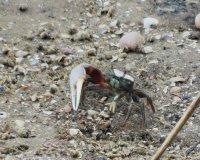 Crab02_s.jpg
