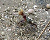 Crab03_s.jpg