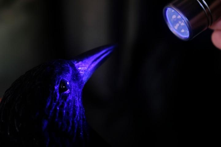 crow decoy.web.jpg