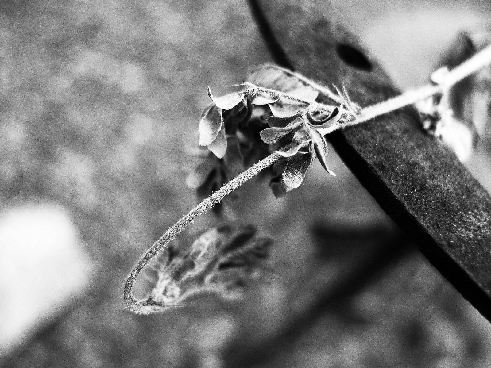dead leaf B&W.jpg