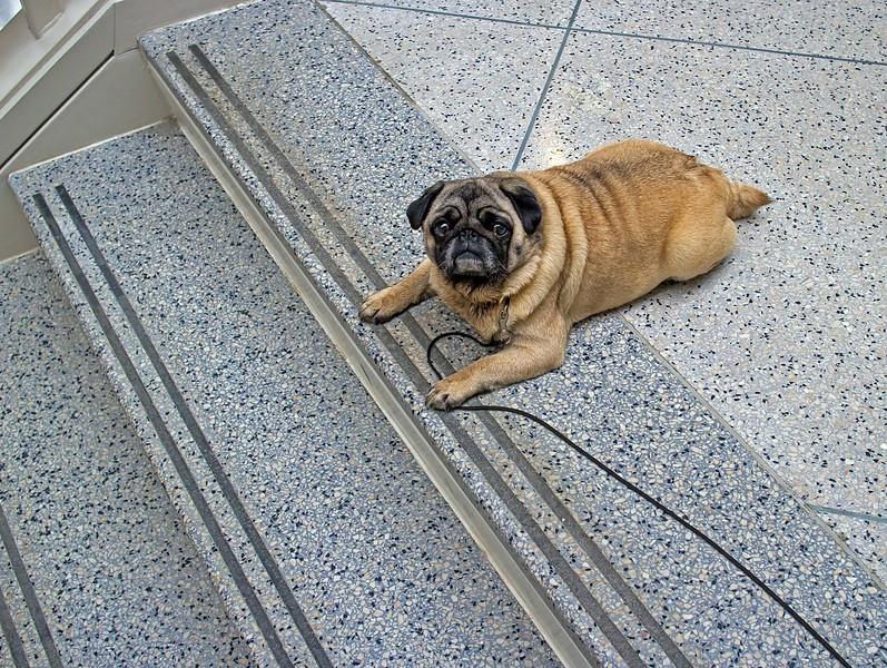dog-no-stairs-L.jpg