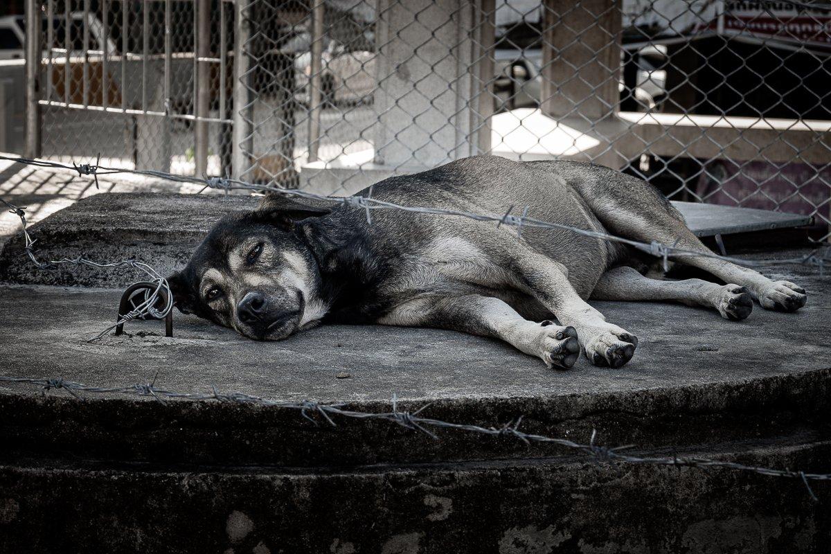 doggy-1-3.jpg