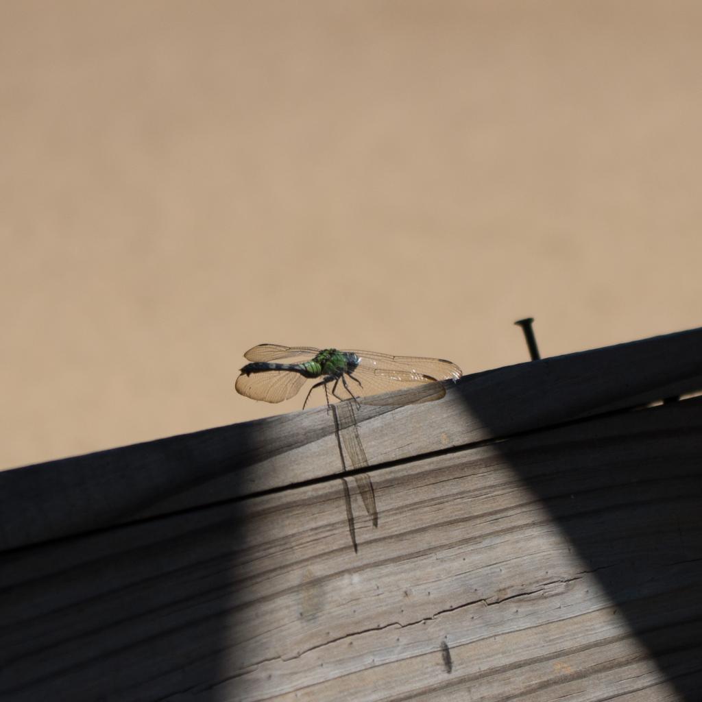 Dragonfly-1_zps83f5f9f5.jpg