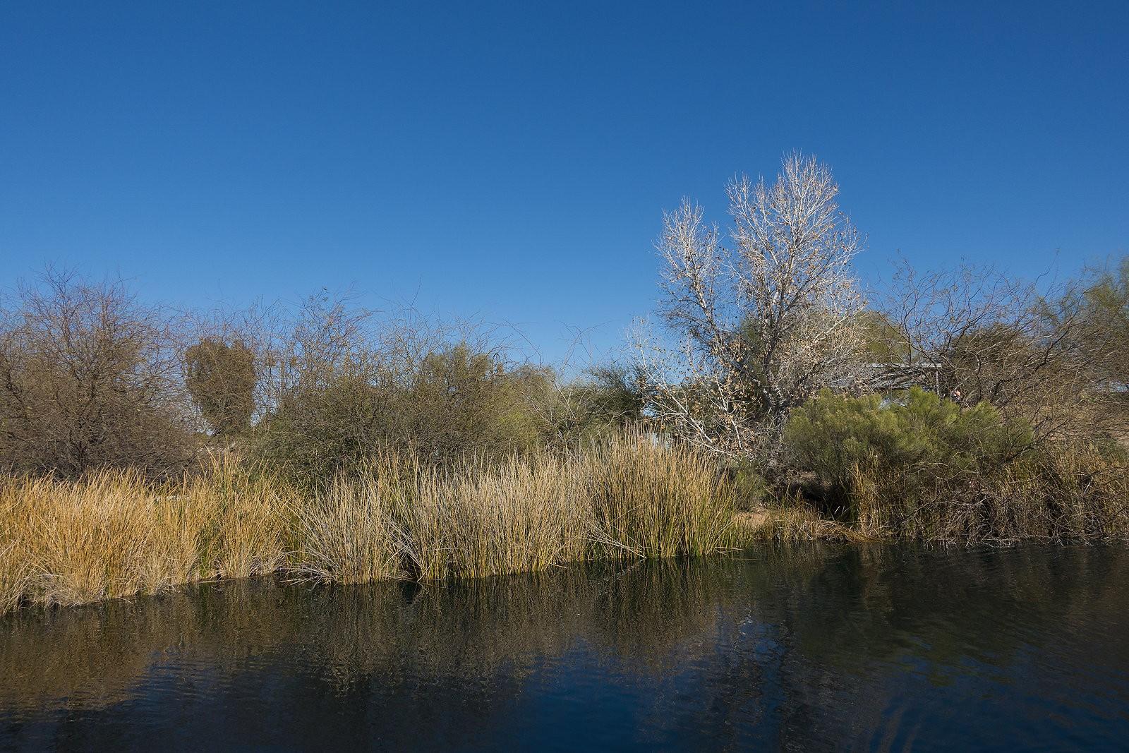 drygrass.jpg