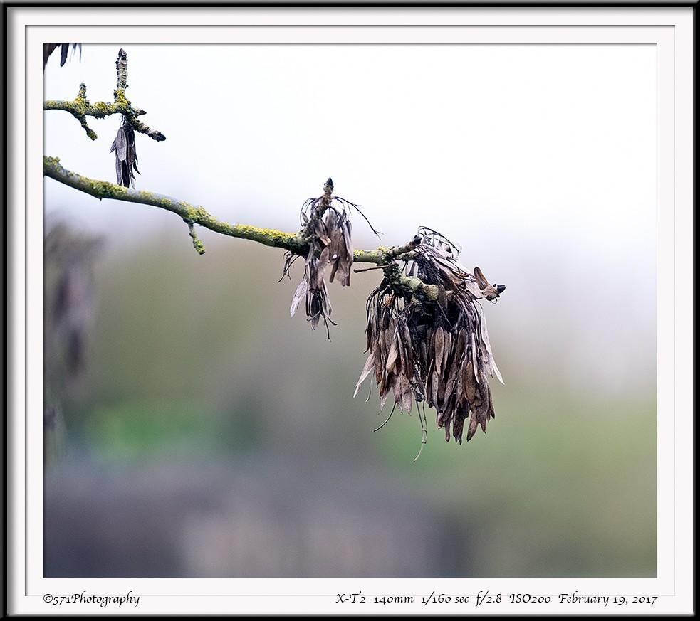 DSCF2392-FrameShop.jpg