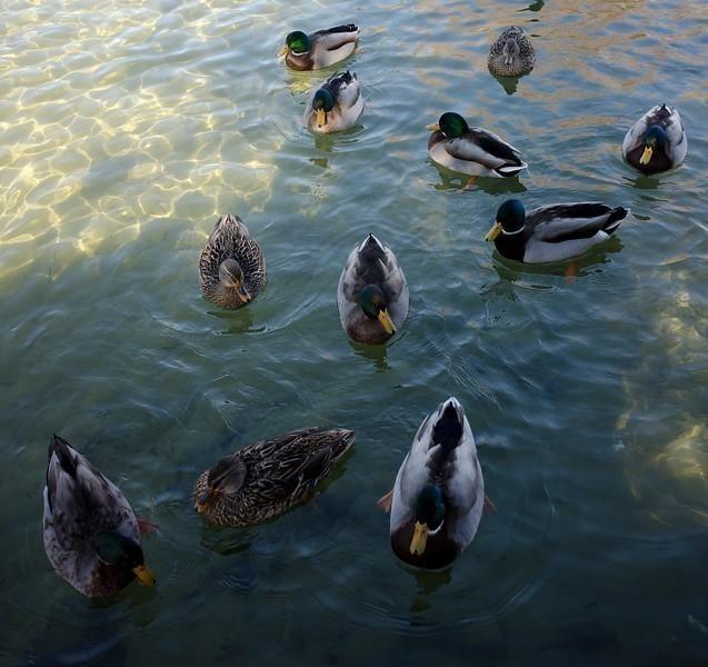ducks23-L.jpg