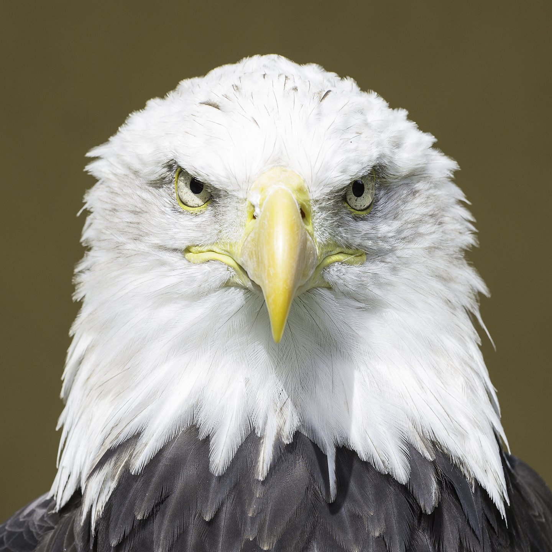 Eagle 2 1440px.jpg