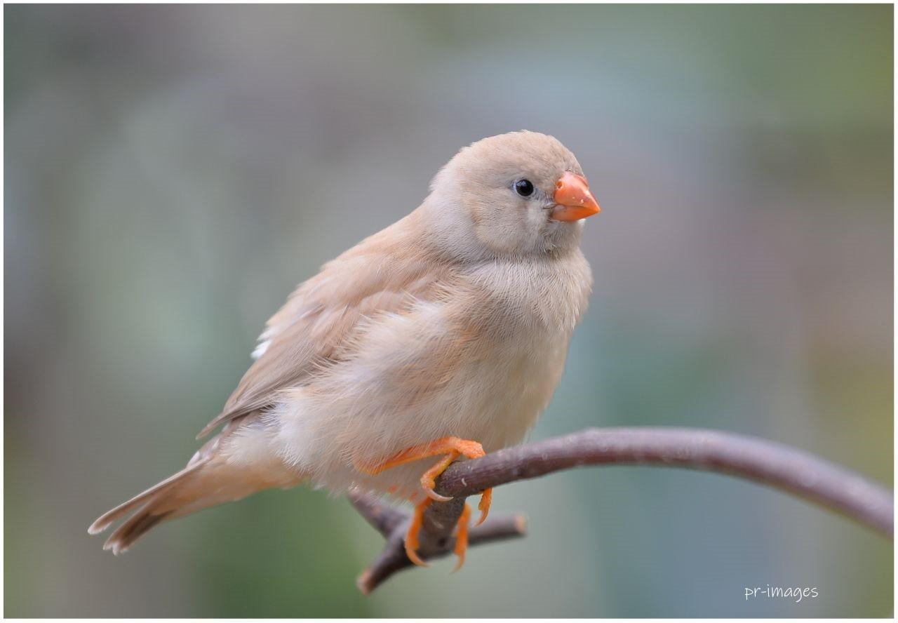 exotic birds (12).JPG