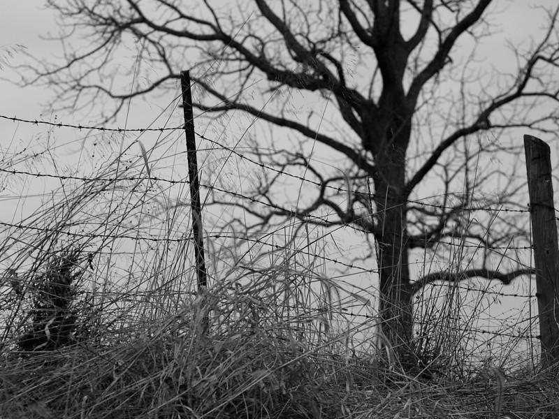 fence%26tree-L.jpg