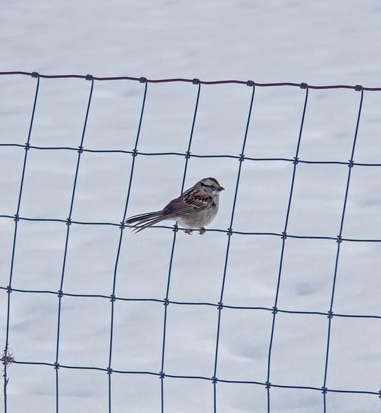 fencebird-L.jpg