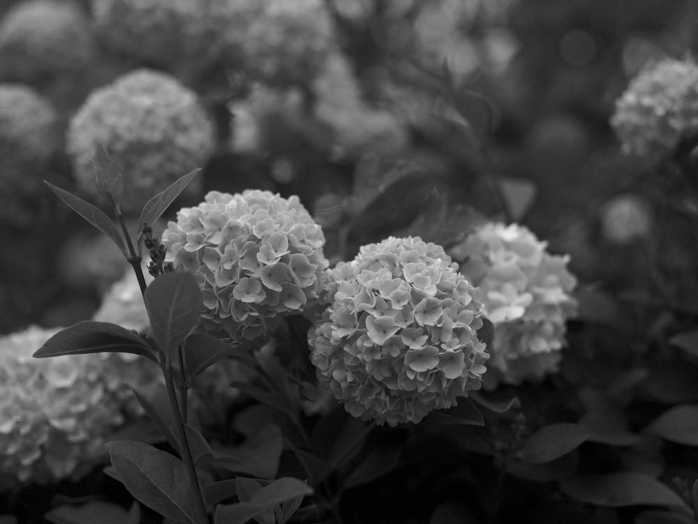 floral_041610.jpg