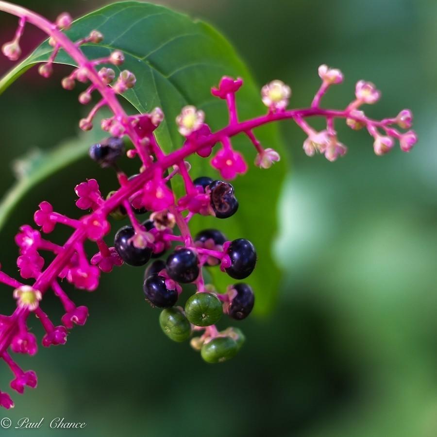 Flower 1 (small).jpg