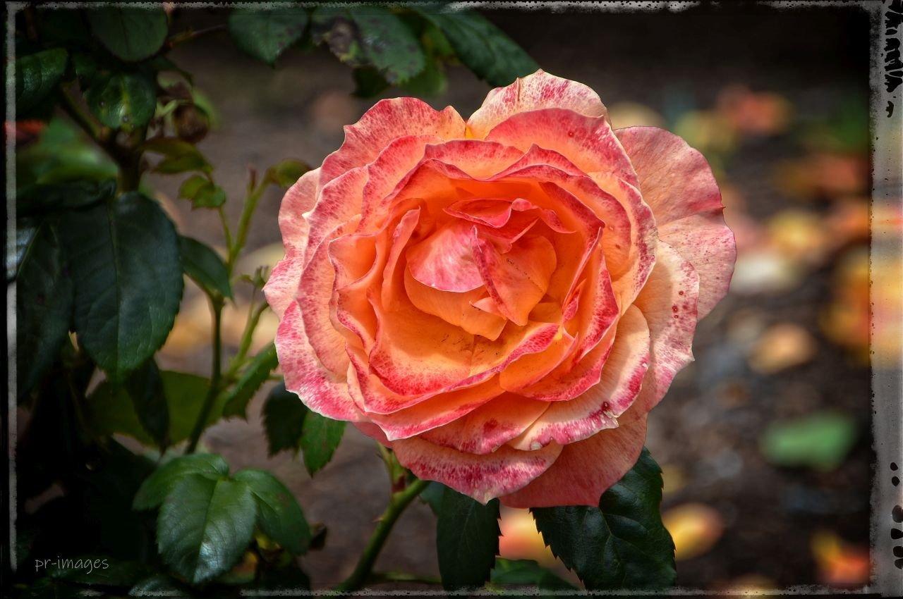 Flower (17).JPG