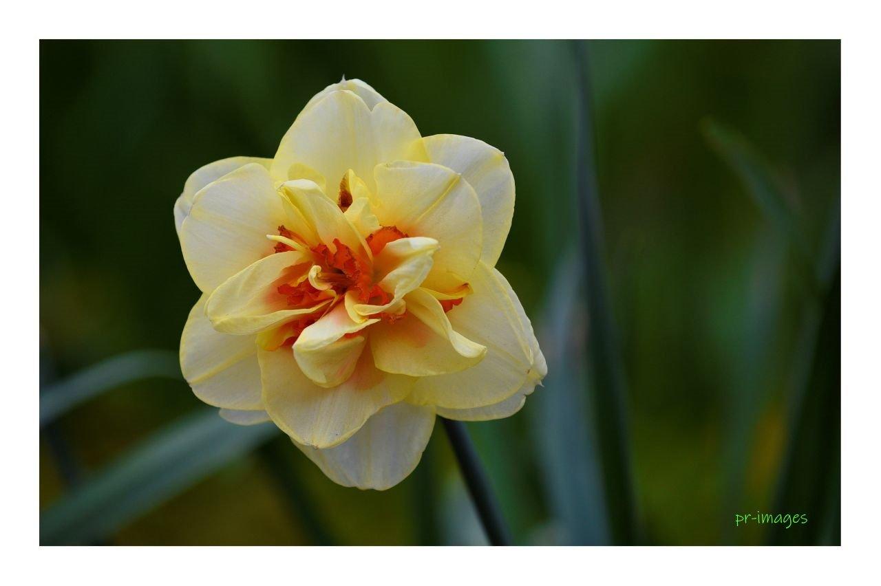 flower 2021   38.JPG