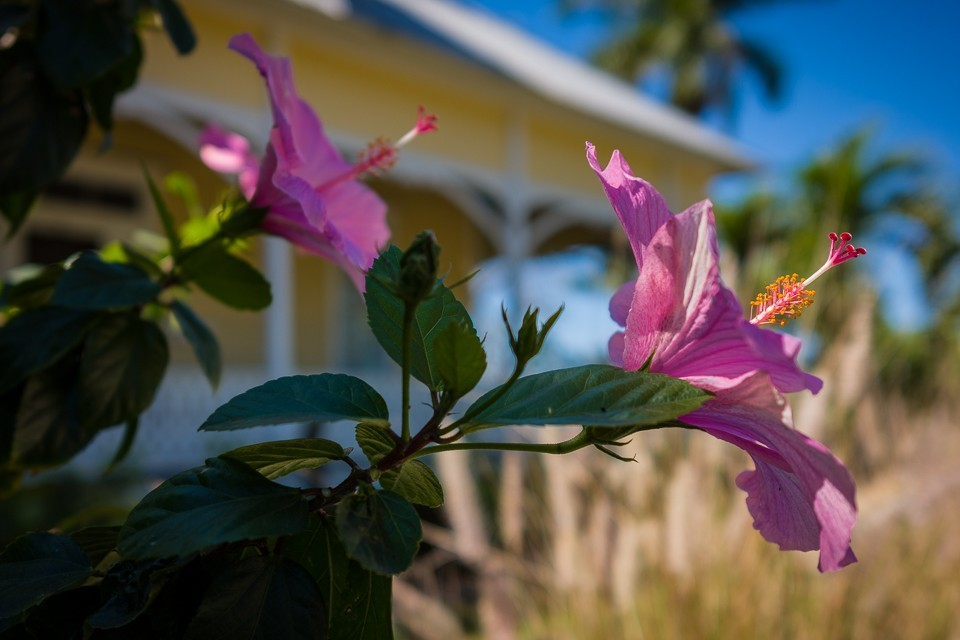 Flower Close-up.jpg