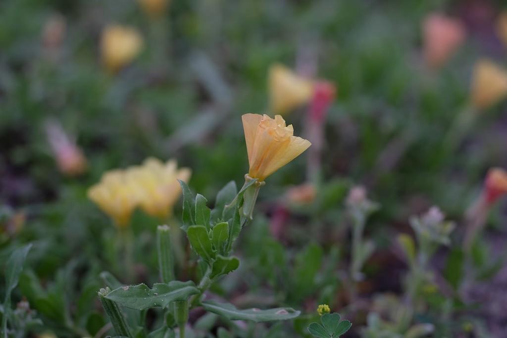 Flower-XL.jpg