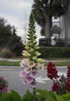 Flower01_s.jpg