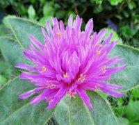 Flower06_s.jpg