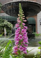 Flower09_s.jpg