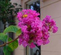 Flower14_s.jpg
