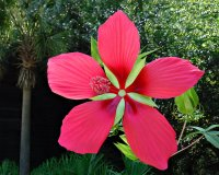 Flower15_s.jpg