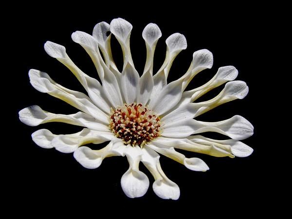 flower5%20%284%29-M.jpg