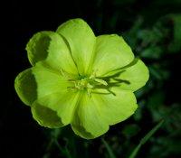 Flower75_s.jpg