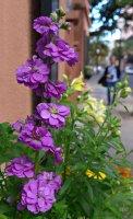 Flower77_s.jpg