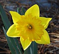 Flower82_s.jpg