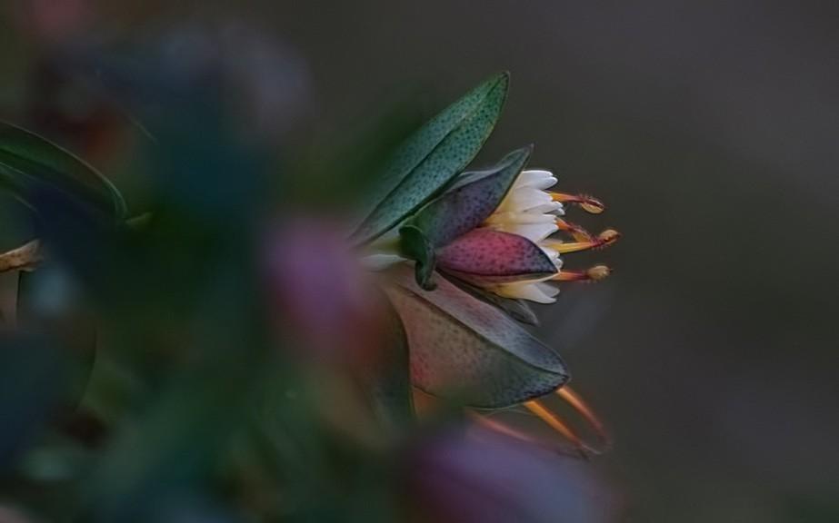 flowerbokeh.jpeg