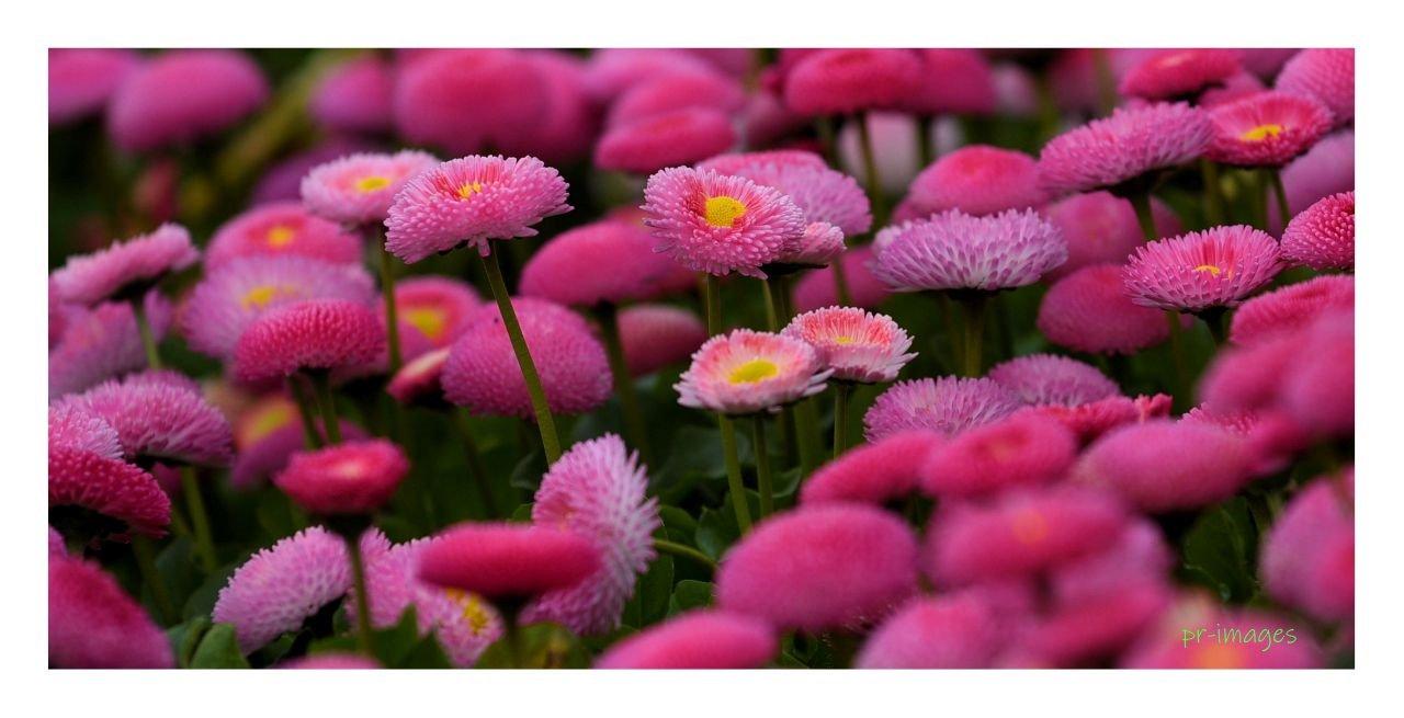 flowers 2021  84.JPG
