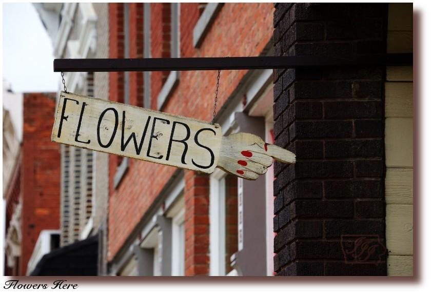 Flowers%20Here_6934%20post.jpg