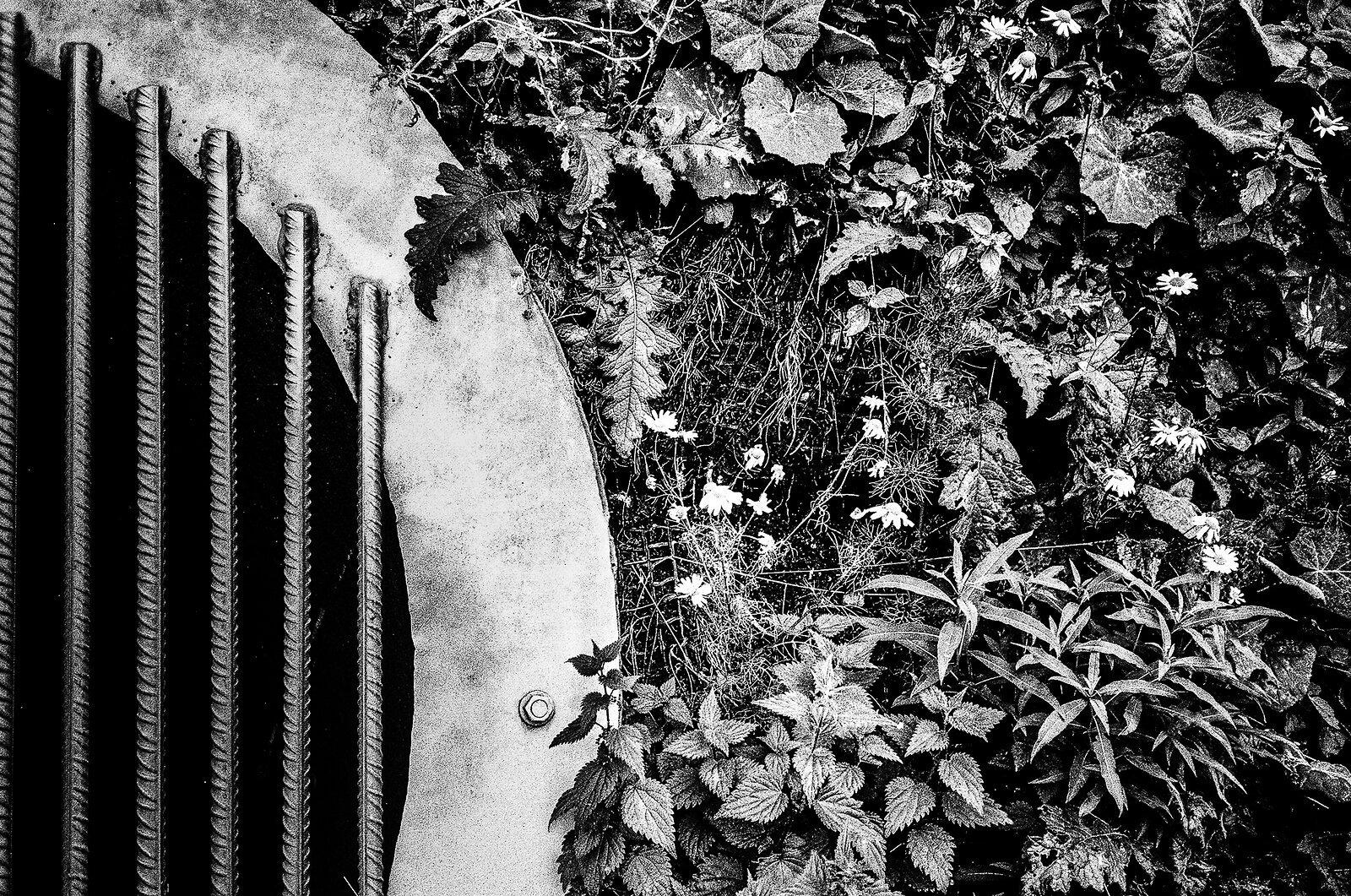 Flowers and stuff.jpg