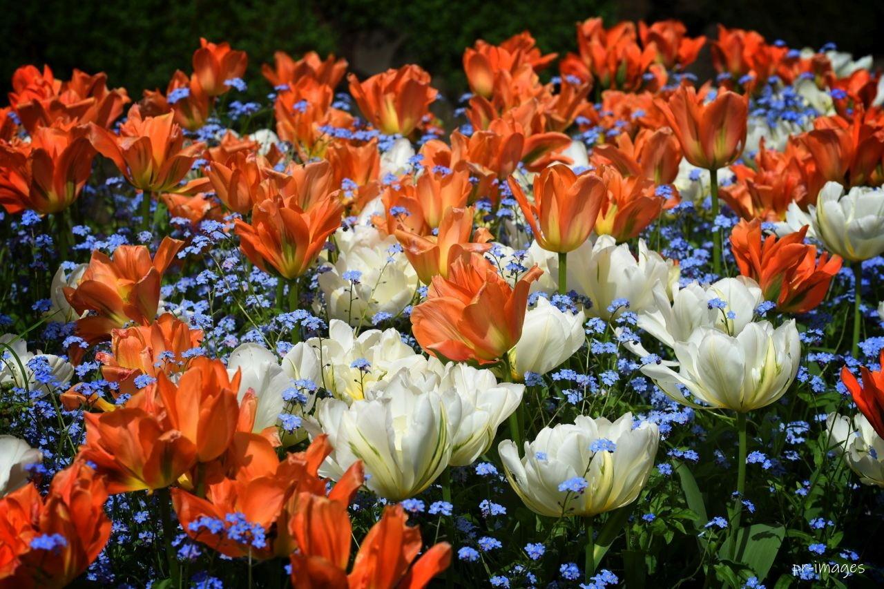 Flowers Queen Elisabeth 2020 (2).JPG