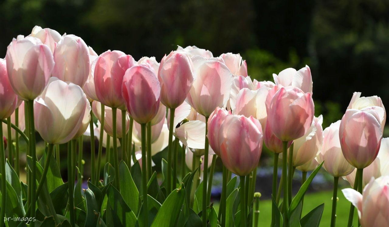 Flowers Queen Elisabeth 2020 (4).JPG