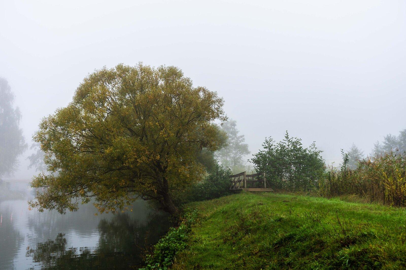 Foggy W.jpg
