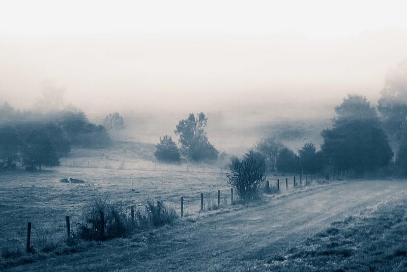 foggyfield2-L.jpg