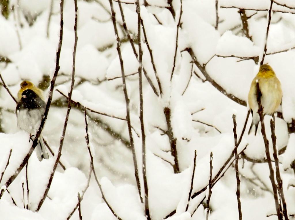 frozen%20birds2_zpsgsfbrdpp.jpg