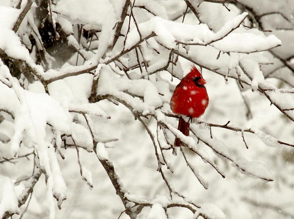 frozen%20birds6_zpsy8ppnrdq.jpg